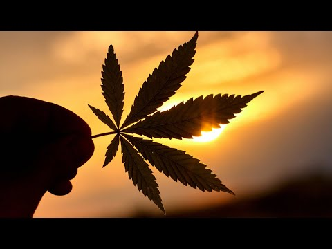HOW TO MAKE MONEY ($30k - $250k+) Working In The Cannabis Industry!
