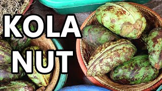 KOLA NUT - The Stimulating Fruit Once Used in COCA COLA - Weird Fruit Explorer ep. 379
