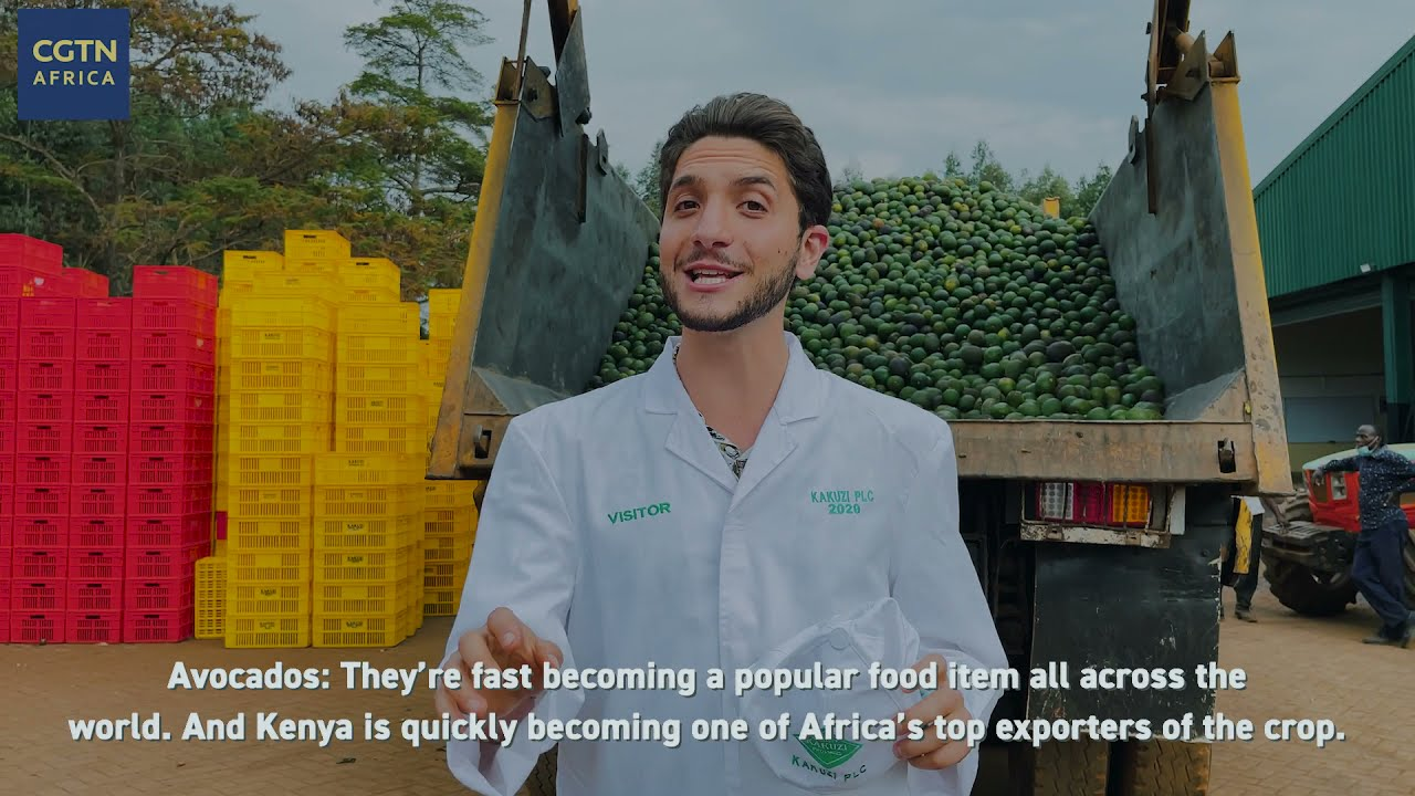 Inside a Kenyan avocado export facility