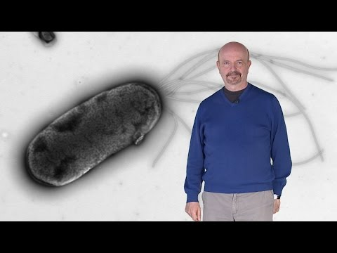 Synthetic Biology:  Cyborg-ization of bacteria for degradation of pollutants - Victor de Lorenzo
