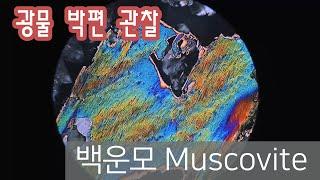 [광물] 백운모 박편 관찰하기 muscovite in …