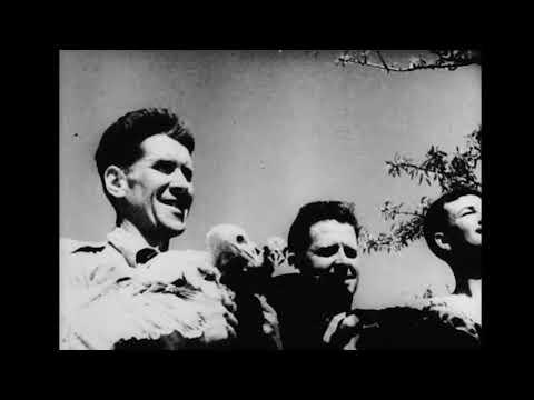 Canadian Italian Campaign WW2 Reels