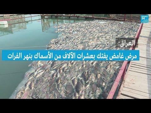 العراق: نفوق عشرات الآلاف من الأسماك بنهر الفرات بسبب مرض غامض  - 13:55-2018 / 11 / 10