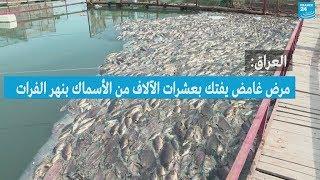 العراق: نفوق عشرات الآلاف من الأسماك بنهر الفرات بسبب مرض غامض