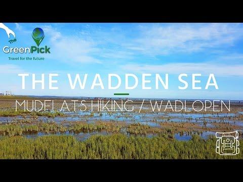 Wadden Sea Netherlands - Mudflats Hiking