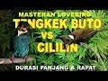 Masteran Tengkek Buto Vs Cililin Durasi Panjang  Mp3 - Mp4 Download