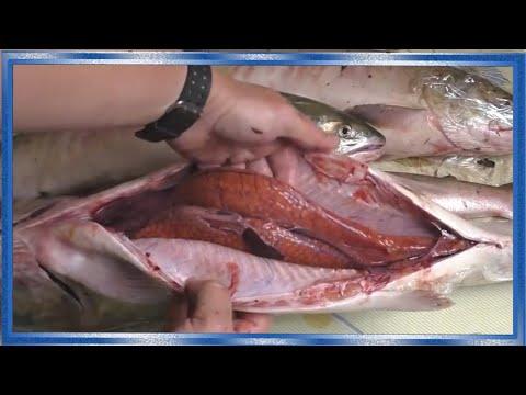Как определить рыбу с икрой