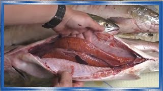 Как отличить самку от самца лососей,Горбуша,кета,сёмга,кижуч