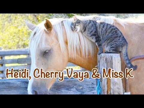 Heidi, Cherry & Vaya Go To The Stables - Children's Bedtime Story/Meditation