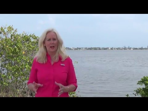 Infantini Indian River Lagoon Is Not A Right Or Left Issue
