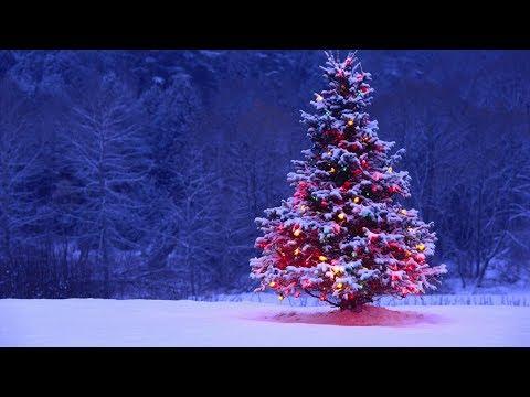 雪が降るクリスマス ミュージックライブ Christmas Jazz Live