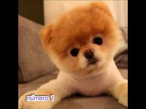 Los perritos m s bonitos del mundo youtube - Fotos de los cuartos mas bonitos del mundo ...