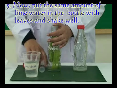 Photosynthesis Experiment   Pakistan Science  Club  