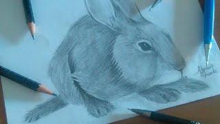 Desenhando Coelho - Speed Draw