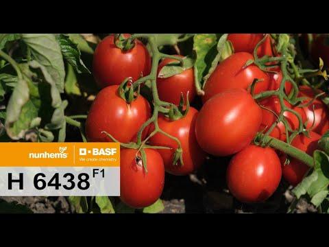 промышленный томат Н 6438 F1 Nunhems, BASF.