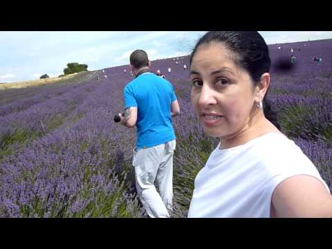 Lavender Farm - Hitchin / UK