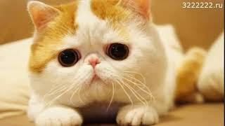 Чистка зубов у собак и кошек