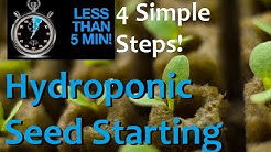 How to Start Seeds For Hydroponics in 5 minutes and 4 EZ Steps