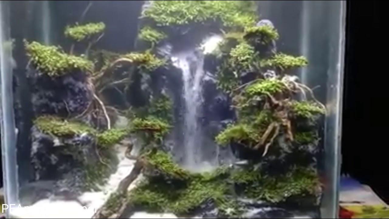 aquascape tema tebing batu dan air terjun - YouTube