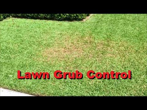 How To Get Rid Of Lawn Grub Worms - [Lawn Grub Control] [Lawn