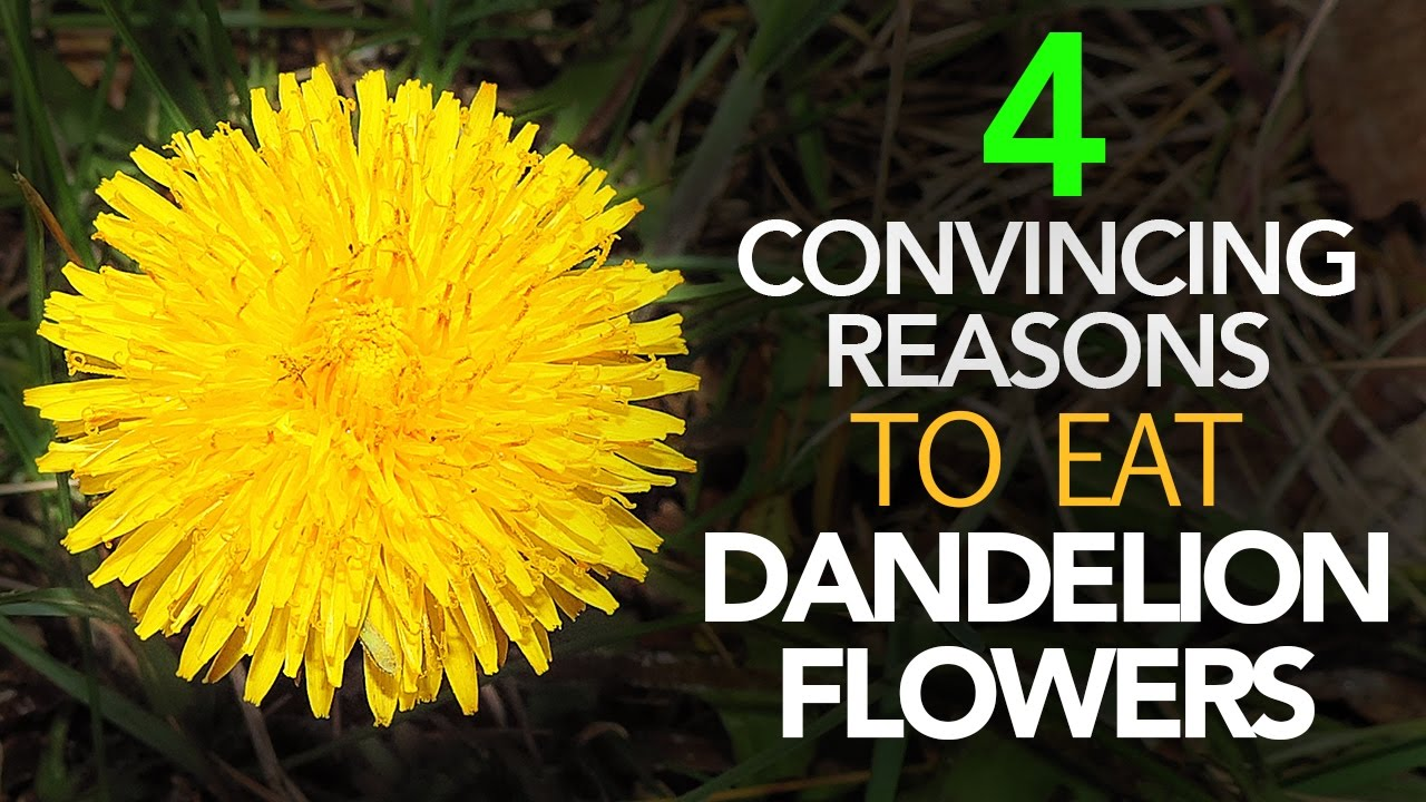 is the healthiest part of dandelion its flower? - youtube
