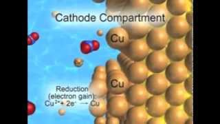 electrolytic cell