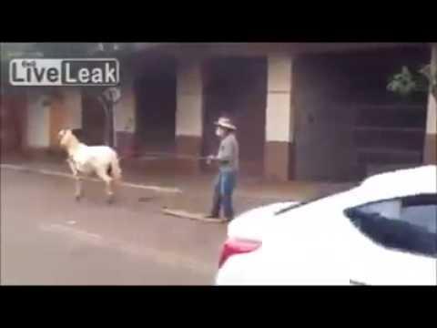 Video lucu olahraga sama kuda