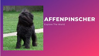 Explore The Whole World  Affenpinscher