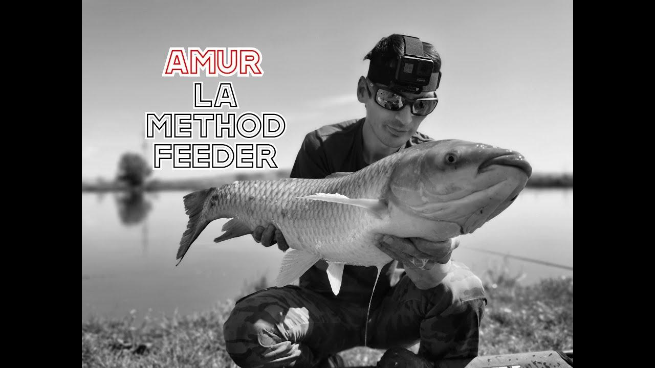 Download Pescuit La Feeder AMUR -TEN, CTENO - LA FEEDER Driluri si Crapi Superbi - Preston Method Feeder