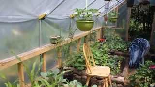 Tour of Our Organic Garden