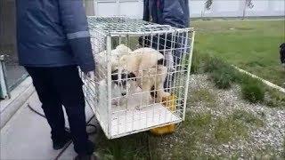 Стерилизовала 4 х собак  щенков, взятых к себе еще осенью прошлого года