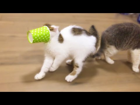 Funny Cats | Cute Kittens vs Cup | Animals TV