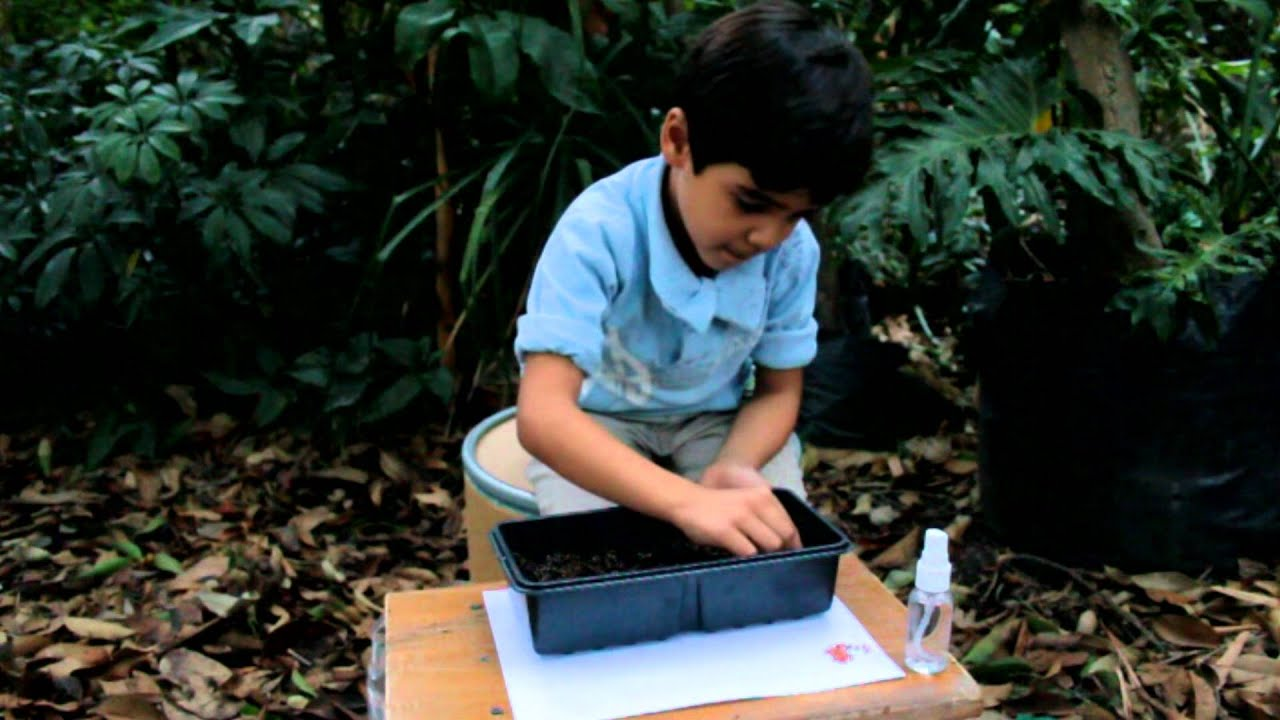 Mini invernaderos hidroponicos youtube - Mini invernadero casero ...