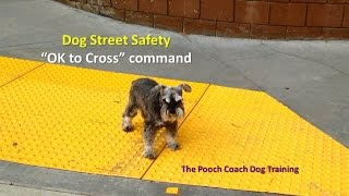 Save Your Dog's Life - Teach Her To Respect The Street!