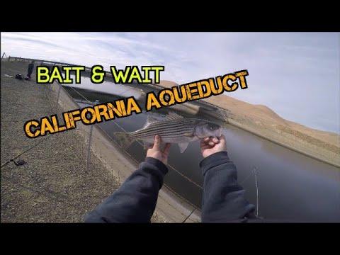 Bait & Wait @ca aqueduct (cottonwood area check 11)