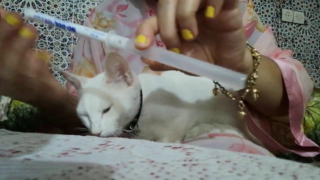 دواء فعال ضد زكام القطط من الصيدلية البشرية Youtube