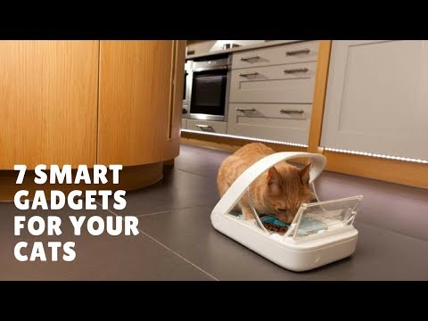 7 Smart Gadgets for Your Cats