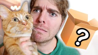Download WEIRD CAT PRODUCTS I BOUGHT ONLINE Mp3 and Videos