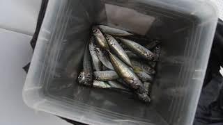Морская рыбалка в Сочи цены 2020 отзывы