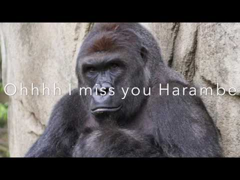 Harambe Tribute Song FilthyFrankTv (Lyric Video)