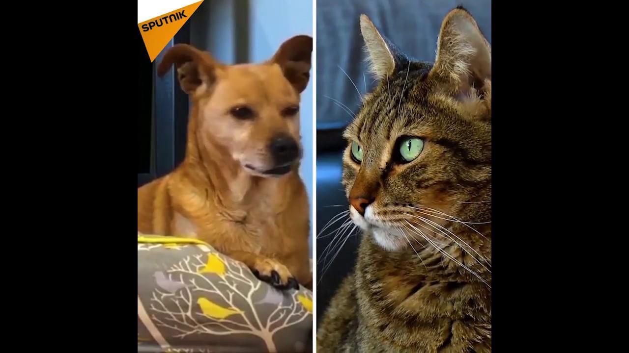 Jak Reagują Na śmierć Właściciela Kot I Pies Youtube