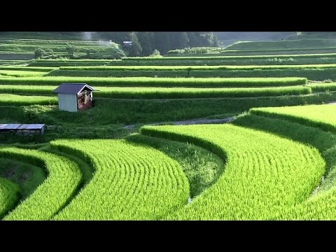 Satoyama Japan | The Secret Watergarden | Discovery English