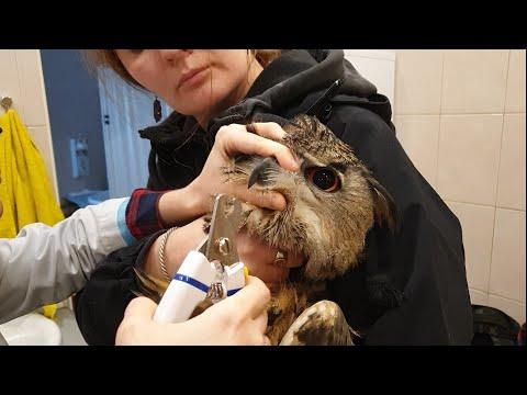 Техосмотр совы Ёлки у ветеринара