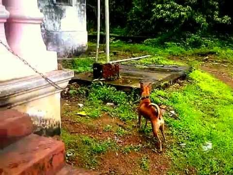 Stupid Dog Barking at Greenery
