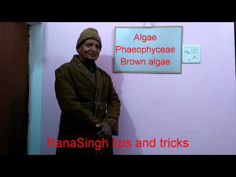 Biology- Class XI/ Algae/ Phaeophyceae/ Brown algae