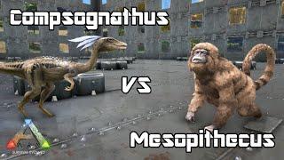 ARK: Survival Evolved - Mesopithecus vs Compsognathus - Dino Battle