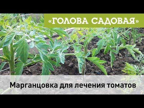 Вопрос: С какими садовыми вредителями помогает бороться раствор марганцовки?