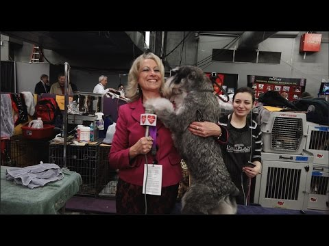 140th Westminister Kennel Club Dog Show 2016