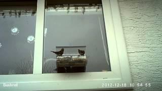Window Bird Feeder - Guarding The Treasure