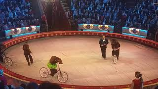 Russian Bear riding bicycle in Moscow circus